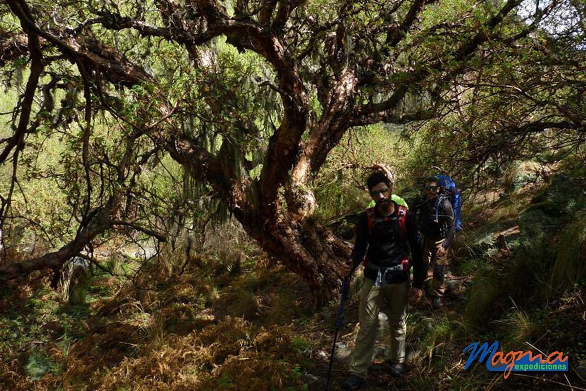 Bosques del Champaquí Trekking al Hueco Verde