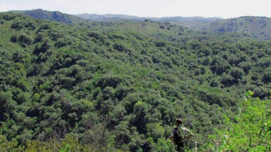 Los Quebrachitos un gran pulmón en Sierras Chicas